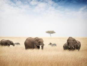 preview.elephant-et-zebre-savane—masai-mara—72605_token_n9ayvrfy